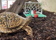 """""""Oracolele"""" pentru EURO 2020: o țestoasă și un motan surd"""