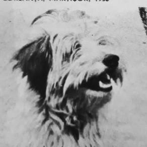 Ar fi fost ziua lui Zdreanță, câinele preferat al lui Arghezi / Audio