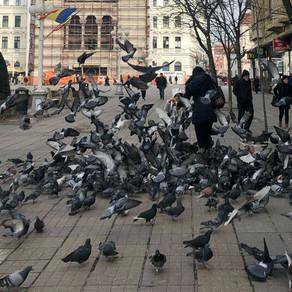 Orașul din România în care e interzisă hrănirea porumbeilor