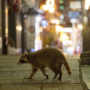 Osaka: Aparitie inedita in centrul orasului