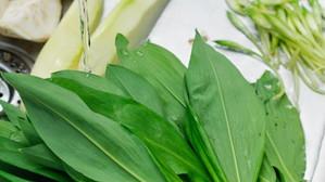 Cea mai cautata planta pentru detoxifiere, primavara