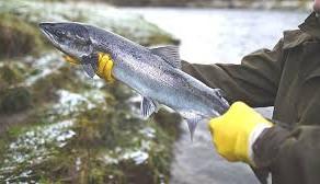 O treime dintre pestii de apa dulce sunt pe cale de disparitie
