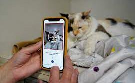 Cum pot afla proprietarii de pisici care este starea de sanatate a felinei cu...telefonul