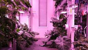 Primele legume care vor fi cultivate pe Marte si pe Luna cresc deja in Antarctica