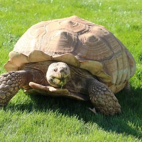 O broască țestoasă face zilnic fizioterapie, la o grădină zoologică din Germania / Foto + Video