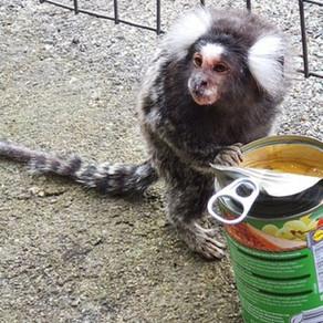 Maimuța din Gară