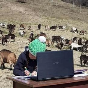 Scoala online, în varf de munte, printre capre / VIDEO