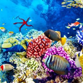 De ce este în pericol Marea Barieră de Corali?