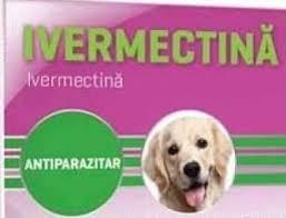 Medicii veterinari recomandă să nu utilizăm medicamentele veterinare cu ivermectină
