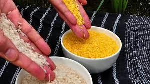 O tara din Asia cultiva orezul modificat genetic pentru prevenirea orbirii in randul copiilor