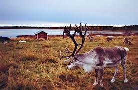 Temperaturi record în Laponia, Țara lui Moș Crăciun