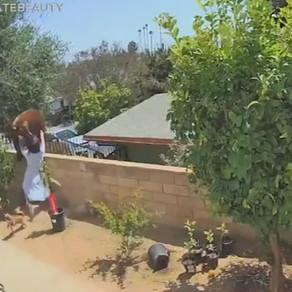 O adolescentă sare asupra unei ursoaice, ca să-și salveze câinii / Video