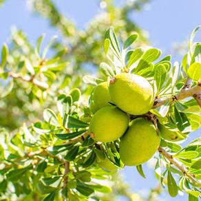 Pomul vieții și uleiul miraculos
