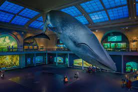 Americanii se vor vaccina sub balena albastra