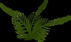 fern-576280_1280.png