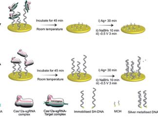 An Amplification-Free Electrochemical CRISPR/Cas Biosensor for Drug-Resistant Bacteria