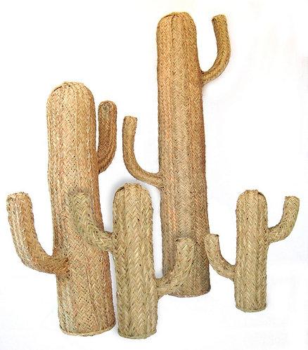 Cactus tressés