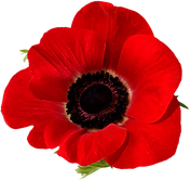 large poppy png.png