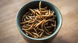 The Explorer - Insect-based proteins