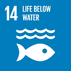 Sustainable 14.webp