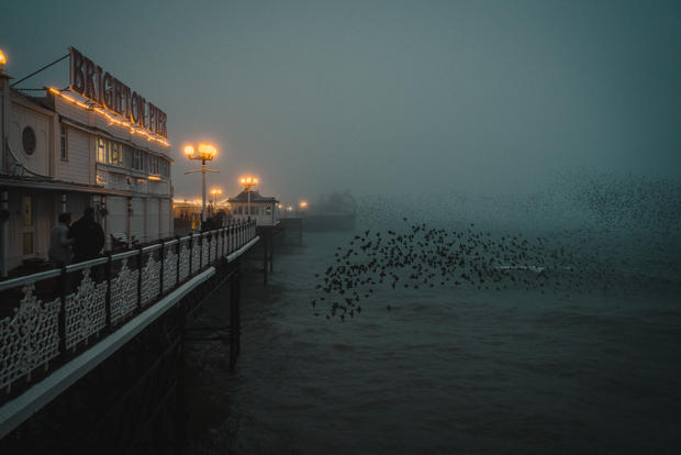 Misty Murmurations