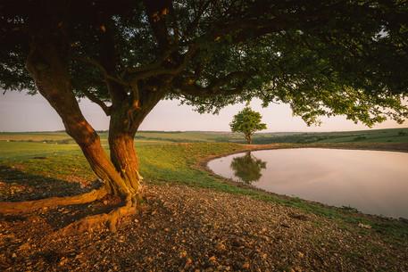 The Dew Pond