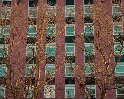 Trees Over Offices