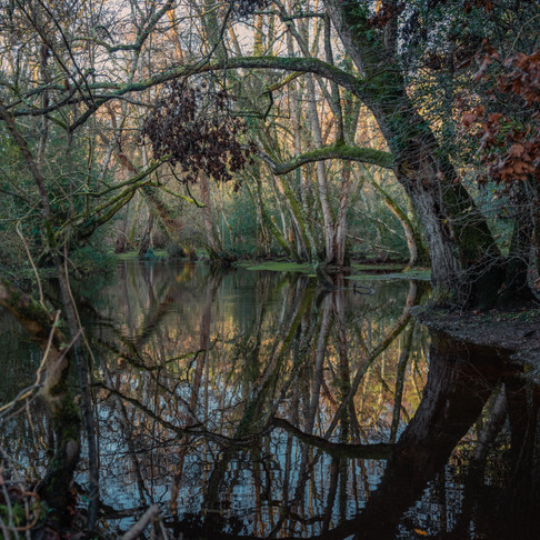 New Forest 4