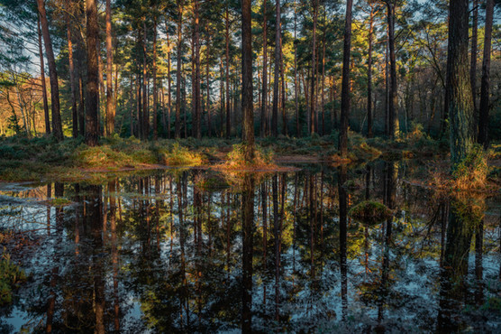New Forest 3