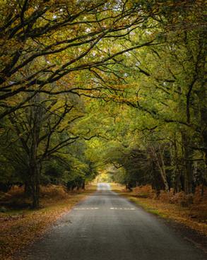 The Road to Bolderwood