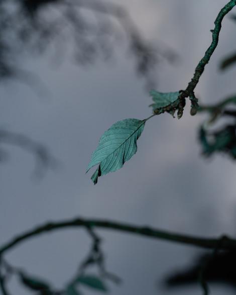 Last Leaves 3