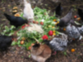 produce reclamation Claires chickens dive in.jpg