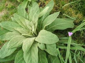Mullien Leaves 500gm