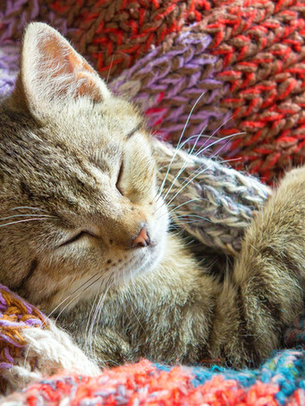 kitten-4332967_1920.jpg