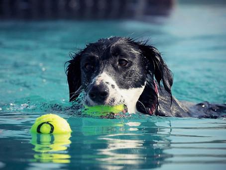 Sommerhitze... Tipps für unsere Senior-Hunde