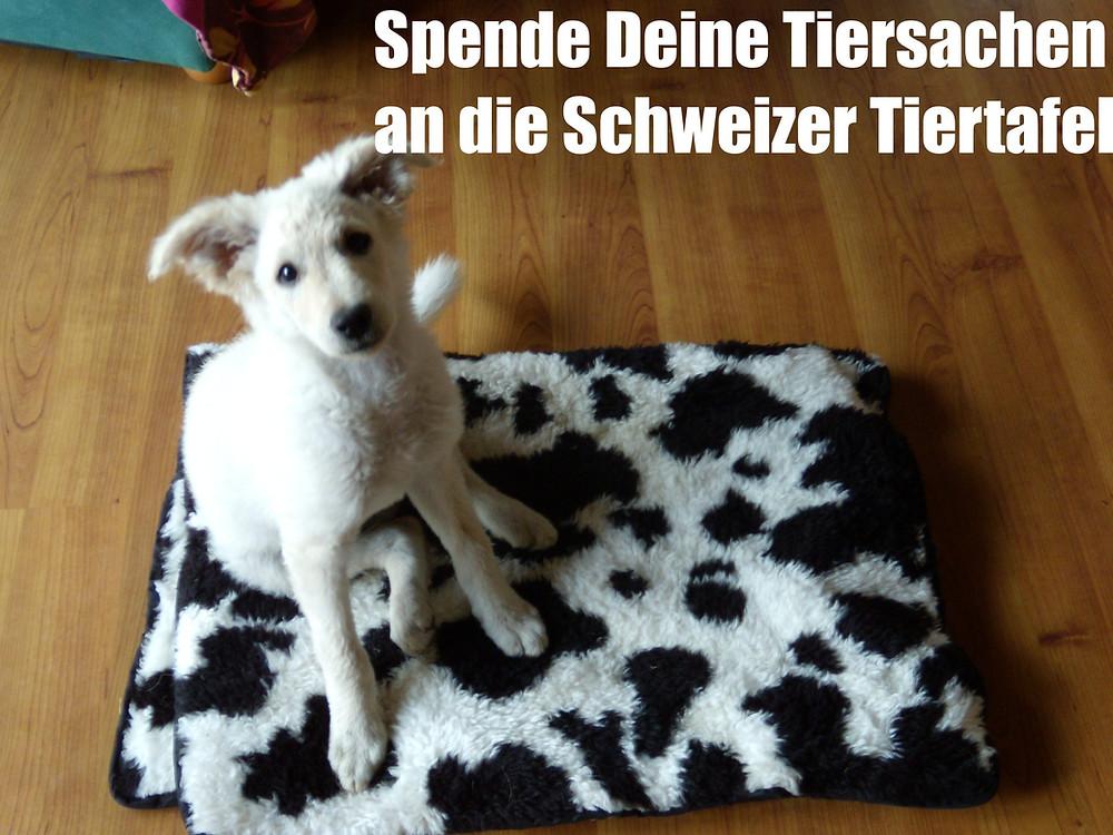 Aufruf zum Spenden von alten Tiersachen an die Schweizer Tiertafel