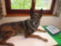 Hund liegt auf der Magnetfeldmappe