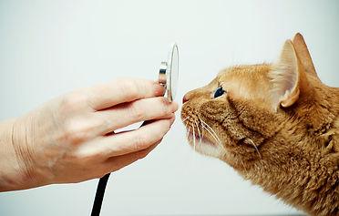 Eine Katze wird untersucht