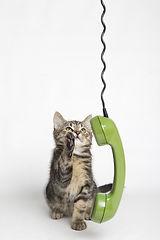 Katze telefoniert mit dem Tierheilpraktiker