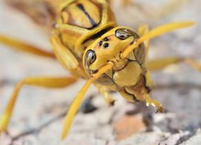 Insektenstich - was tun?