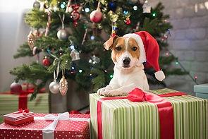 weihnachtsurlaub-mit-hund-produktfoto.jp