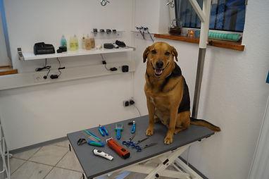 Laakirchen | Oberösterreich | Hundefriseur Katzenfriseur