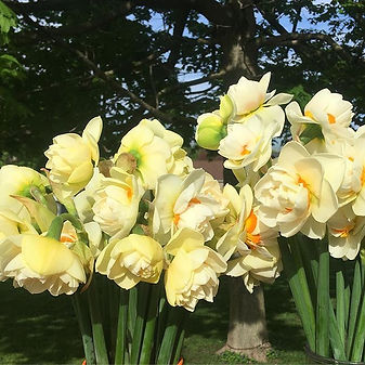 For some reason, I thought daffodils wou