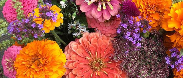 Late Season 2021 Flower Share--PICKUP ONLY