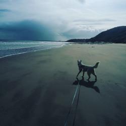 Alaska Beach.jpg