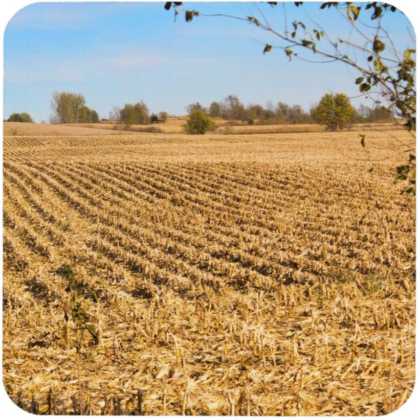 Iowa Cornfield Panorama