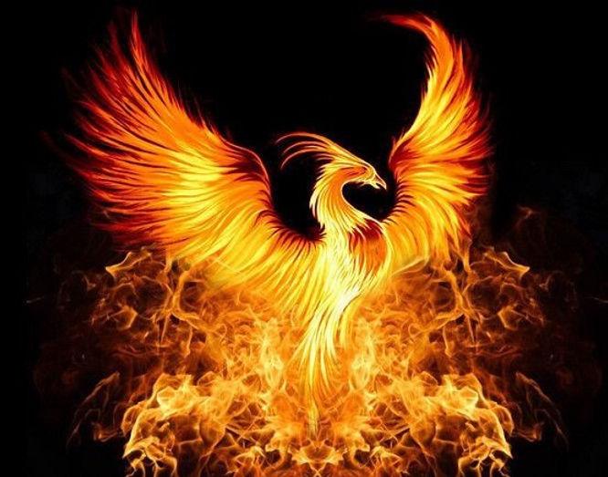 thumbnail_phoenix+rising.jpg