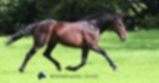 Pegasus Spur completed.jpg