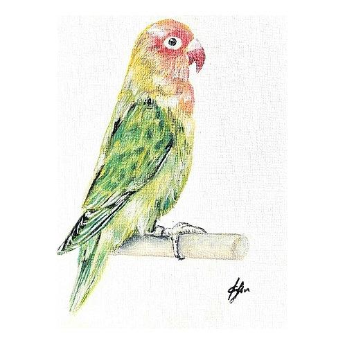 Red Headed Lovebird