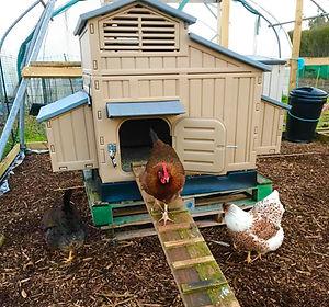 plastic chicken coop.jpg